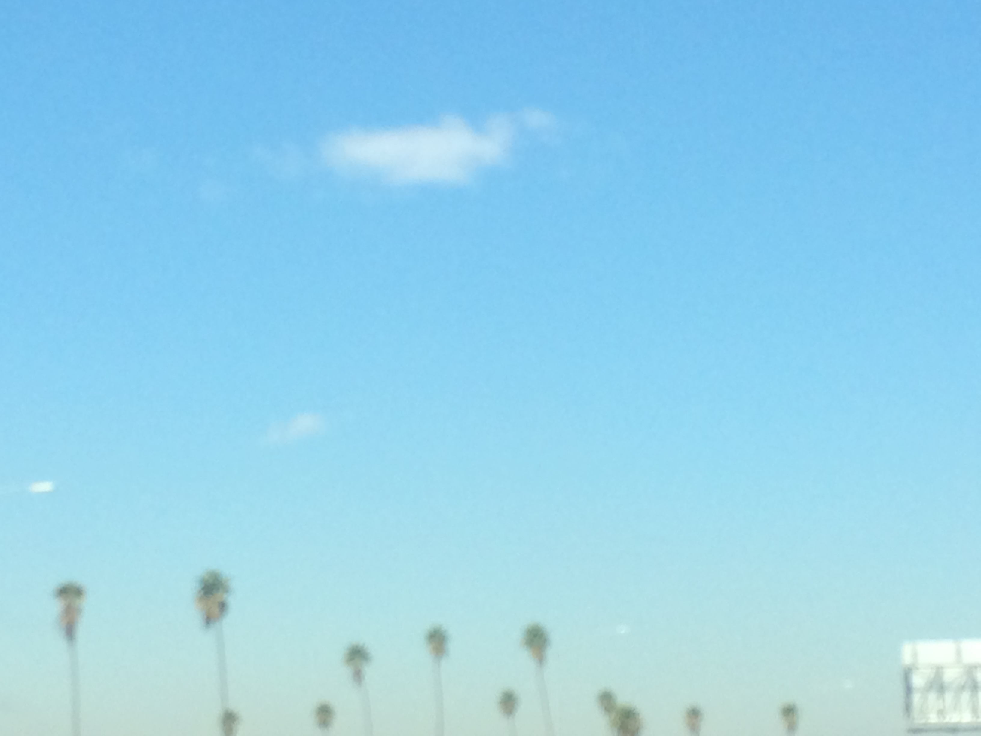 The tops of palm trees beneath a blue sky, single white cloud floats near the top center of the image.